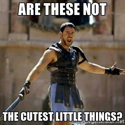 Russell Crowe Gladiator entertained meme, are these not the cutest little things