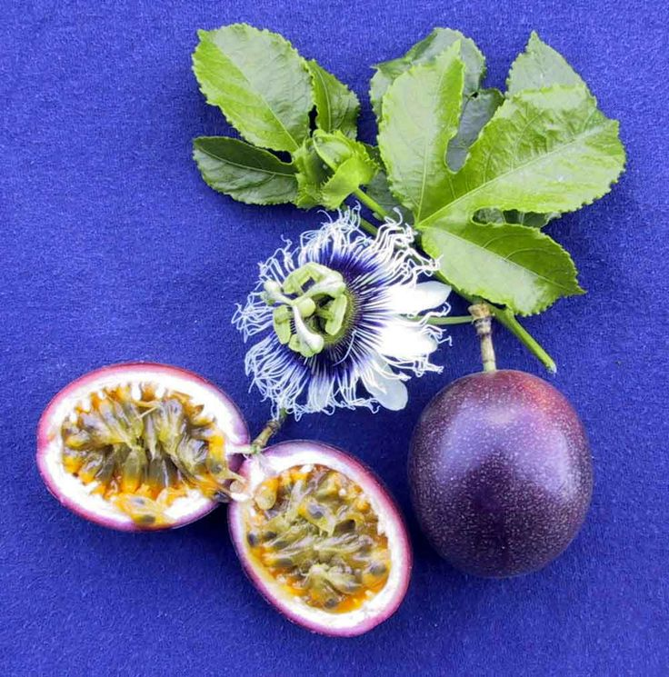 Passion Fruit & Passion Flower